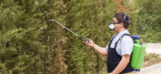 O processo de uma dedetizadora pode prejudicar às plantas?