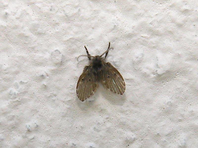 Uma dedetizadora pode te ajudar a acabar com as moscas de banheiro?